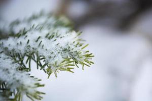 neige fraîche d'hiver photo