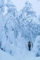 marcher dans la forêt d'hiver photo