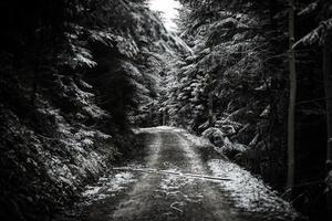 chemin dans la forêt d'hiver
