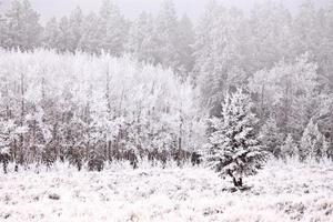 collines de cyprès en hiver photo