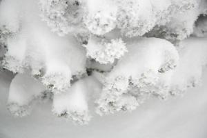 hiver, détail des plantes couvertes de neige photo