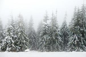 forêt d'hiver dans le brouillard photo