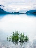 Lac photo