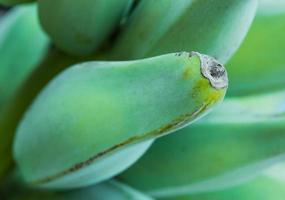 banane non mûre