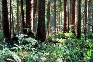 soleil dans la forêt photo