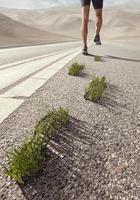 étapes de croissance de l'herbe