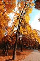 piste cyclable dans le parc en automne photo