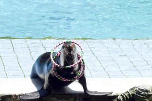 exposition de phoques dans le parc marin photo