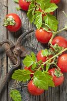 tomates cerises rouges photo
