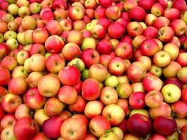 pommes rouges! photo
