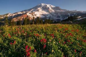 cascade cascade parc national plus pluvieux montagne paradis prairie fleurs sauvages