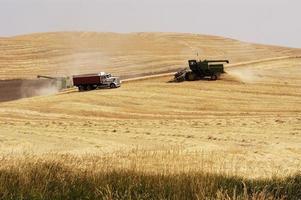 récolte de blé 6 photo