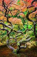 Jardin japonais de Seattle photo