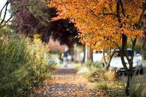 trottoir de quartier automne