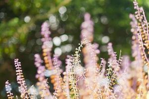 fleurs de printemps rose photo