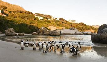pingouins de plage de rochers photo