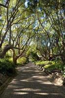 belle allée dans les jardins botaniques de kirstenbosch, cape town