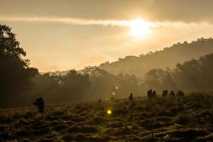 assister à l'aube - camping du mont mahameru photo