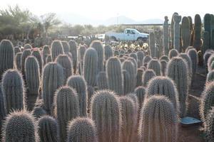 ferme de cactus photo