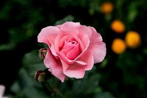 belles fleurs, gros plan, créatif photo