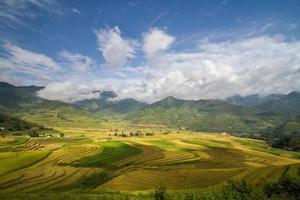 rizières en terrasses au vietnam photo