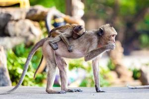 famille de singe photo
