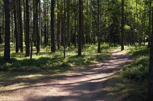 chemin forestier photo