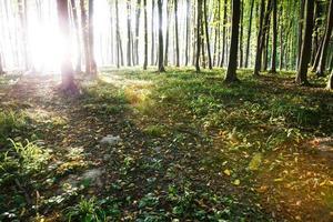 la lumière du soleil tombe sur la route rurale photo