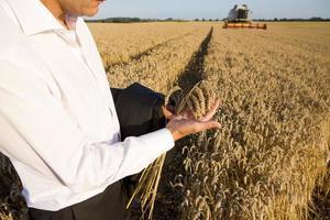 homme d'affaires dans le champ de blé photo