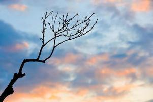 branche au coucher du soleil