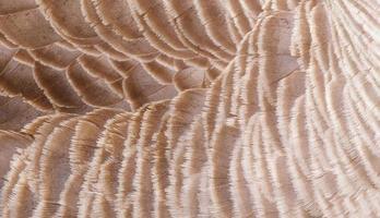 plumes d'oie photo