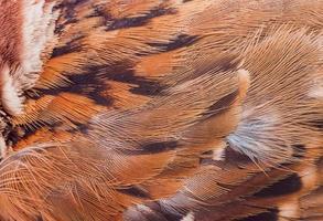 gros plan plume de moineau pour photo