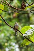 oiseau photo