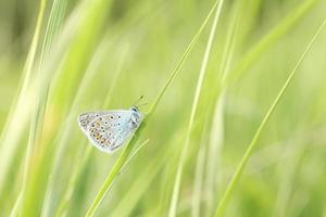 gros plan d'un papillon