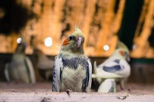 perroquets colorés photo