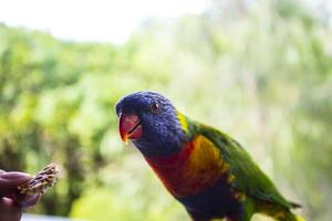 perroquet coloré photo