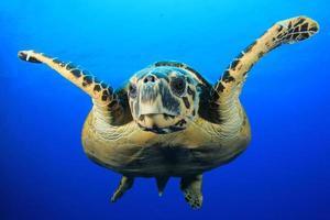 tortue de mer photo