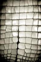 peau d'alligator photo