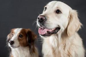 chiens photo