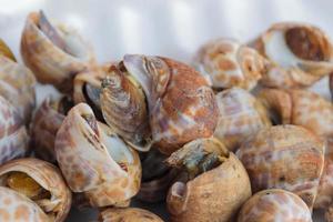 escargots au four