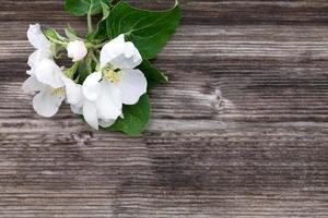 fleurs de pommier sur fond de bois photo