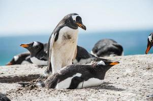 pingouins en antarctique photo