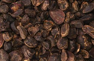 noix de cola entières (image de fond)
