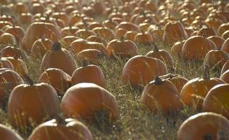 patch de citrouille à l'automne