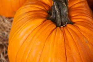 gros plan d'une grosse citrouille orange. fond pour l'automne, l'automne photo
