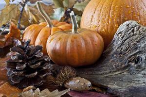 scène d'automne avec des citrouilles