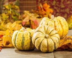 courge automne, à, feuilles automne