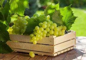 raisins blancs photo