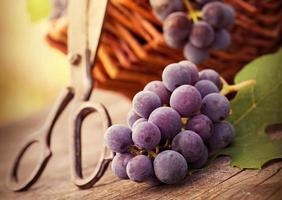 les raisins. photo