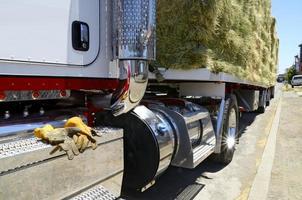 fermer en vue d'un camion chargé de foin photo